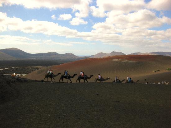Timanfaya National Park: Camel ride