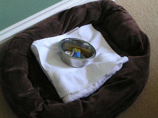 The Wellington Hotel: Dog's bed, towel and treat too