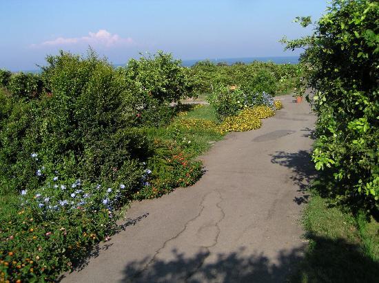 Agriturismo Galea: relaxing setting in the lemon grove