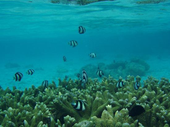 บิยาดู ไอแลนด์ รีสอร์ท: reef is lovely