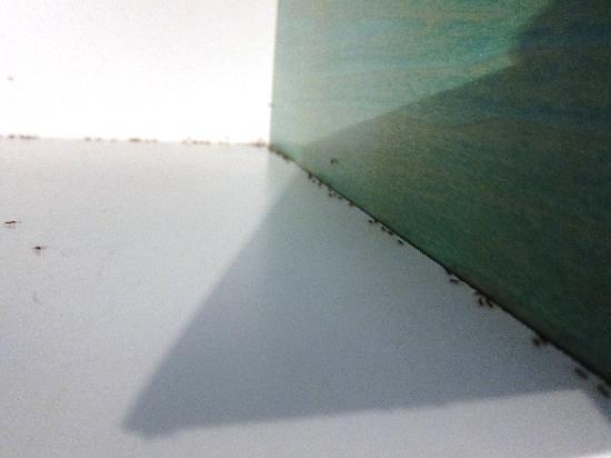 Коста-Парадизо, Италия: ancora formiche