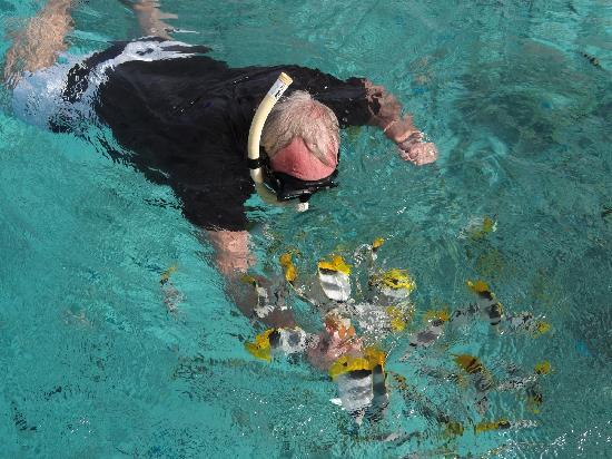 Black Pearl Charters: Feeding fish inside the lagoon