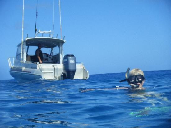 Black Pearl Charters: Snorkelling outside the reef - large fish and Eagle rays