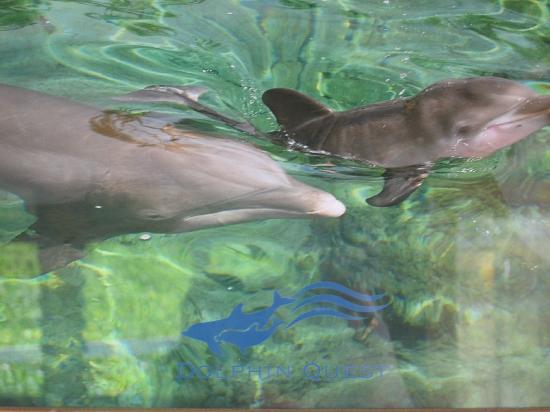 Royal Kona Resort: Hilton Big Island Dolphin Encounter