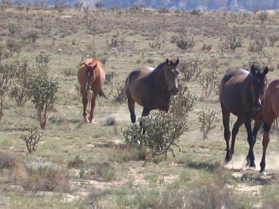New Mexico Jeep Tours: Wild Horses stopping by for a visit.