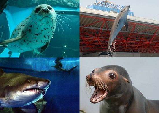 Shinagawa Aquarium: かわいい動物たち