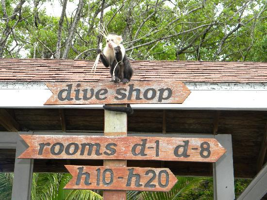 Fantasy Island Beach Resort: Dive Shop