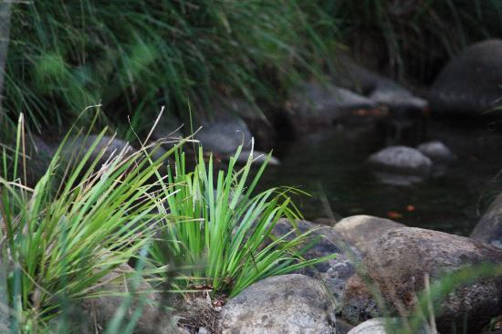 Mt Barney Lodge Country Retreat: The fabulous creek below the camp ground