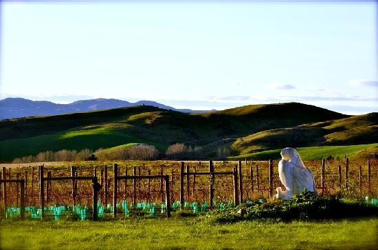 Sublime Lodge : View of the fledgling Vineyard from the verandah