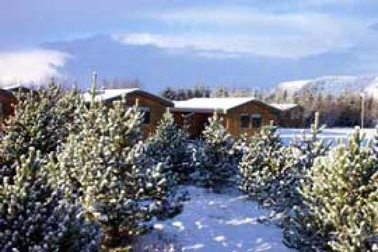 Gesthus Selfoss: Winter picture