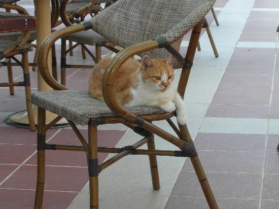 Marti La Perla: Bar cat