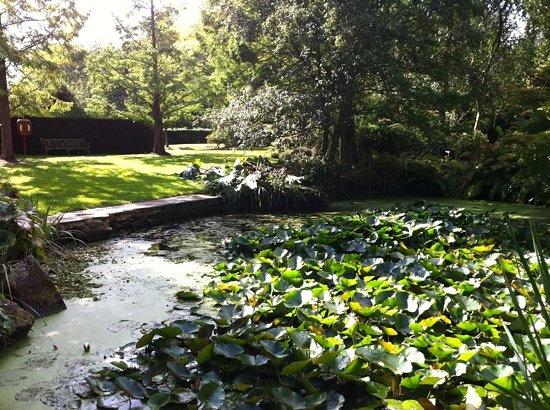 Enfield, UK: garden