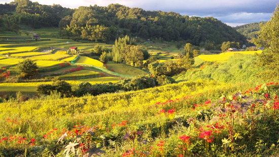 Asuka-mura, ญี่ปุ่น: 棚田の夕景
