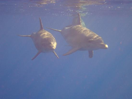 Brayka Bay Reef Resort: Ospiti fissi