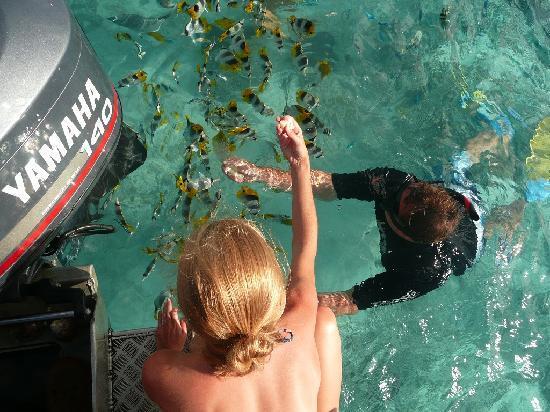 Teking Lagoon Cruises: Feeding the fish