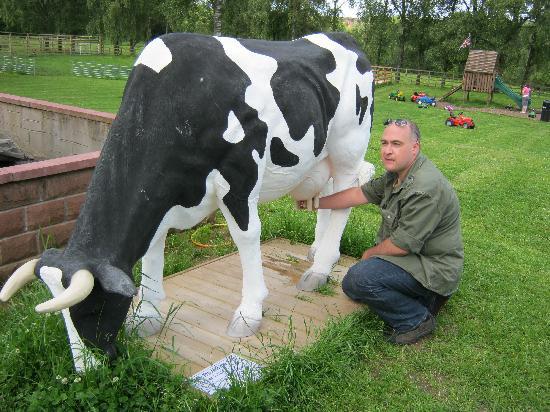 Catrine House: Künstliche Kuh
