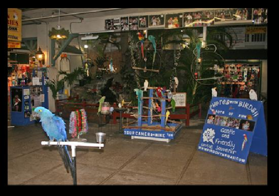 The Bird Guy: where to find us? Near the Puka Dog