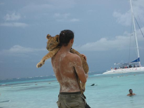 Hotel Riu Palace Las Americas: Lion cub