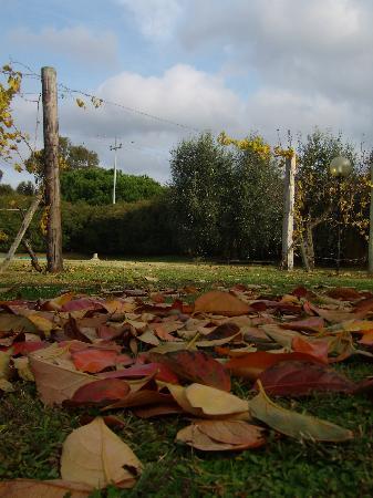Agriturismo Osteria Vecchia: Arriva l'autunno