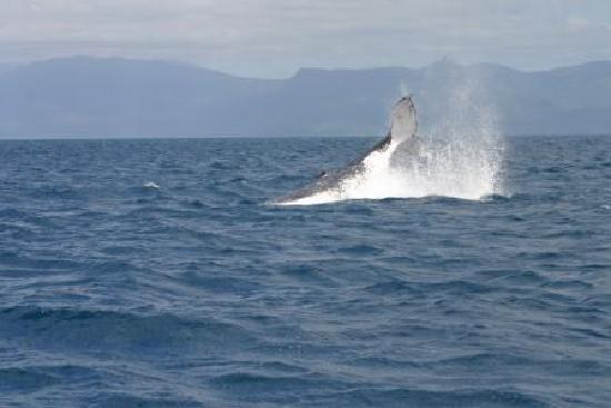 Ocean Safari: Whale right off the boat