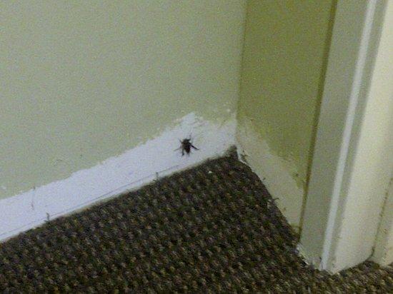 Sleep Inn & Suites: This ain't Jiminy Cricket!