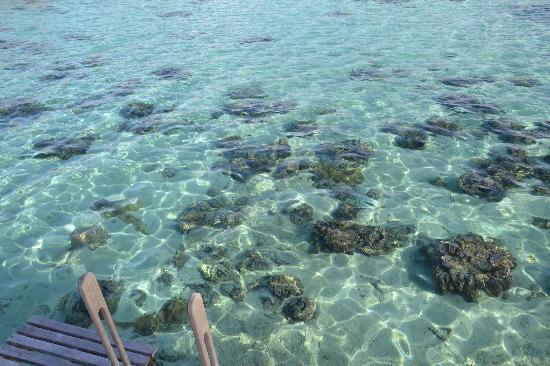 Hilton Moorea Lagoon Resort & Spa: Patates de corail au pied du pilotis