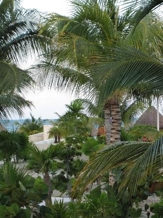 Beloved Playa Mujeres: View from patio of Carinosa 1