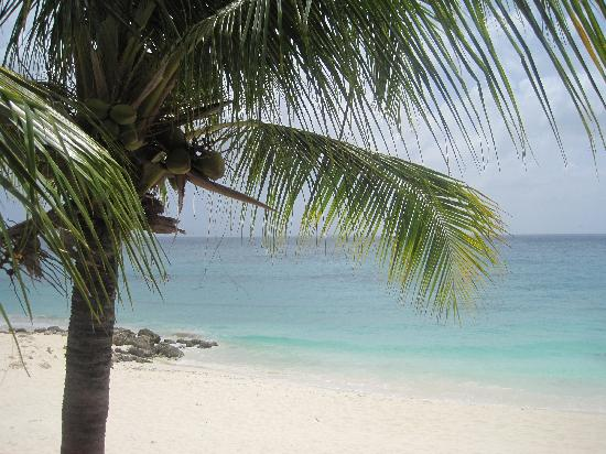 Tamarijn Aruba All Inclusive : View from Tamarijn room 1410