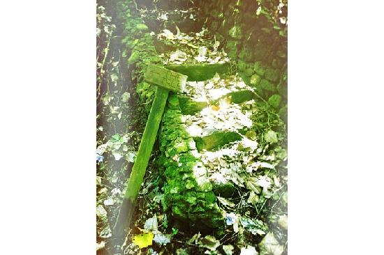 Ottley's Plantation Inn: Beautiful Rainforest