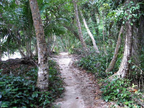 Alby Lodge: Trail to Cahuita Point, in the park