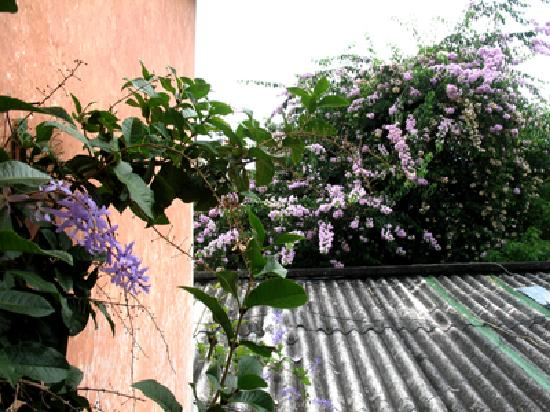 Ximena's Guest House: flowers