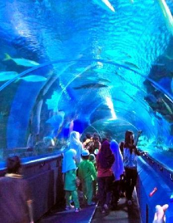 Aquaria KLCC: The Walking Belt around centre Aquarium