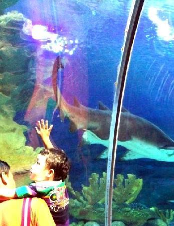 Aquaria KLCC: The Glass wall of the aquarium
