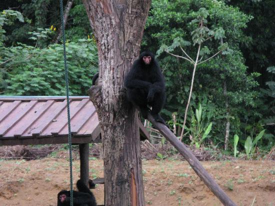 Paramaribo Zoo: Like old men