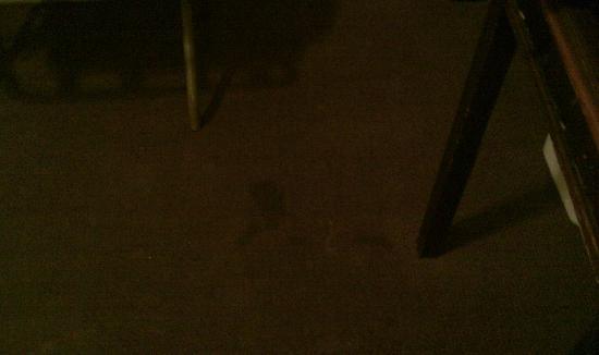 โรงแรมเดย์บรอดเวย์: filthy carpet