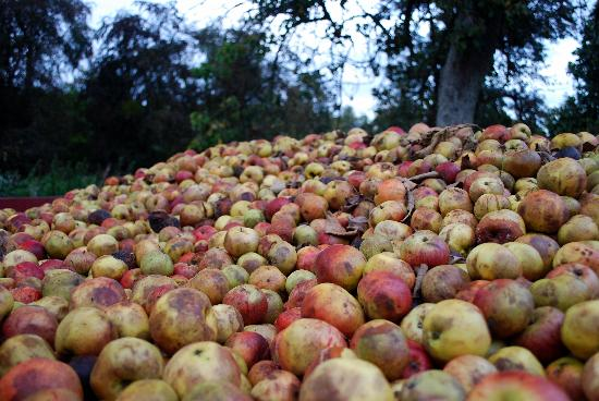 Broome Farmhouse: More apples