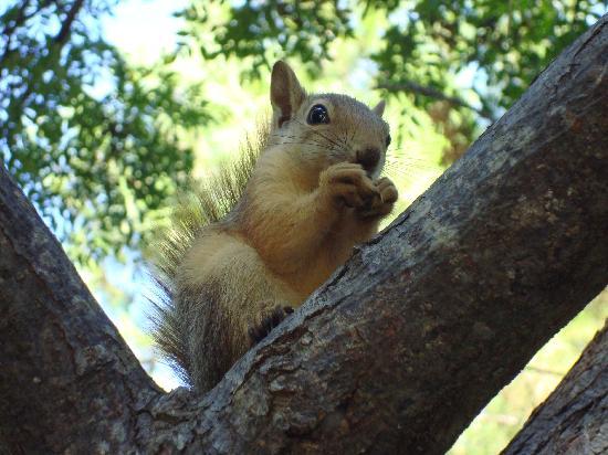 Torba, Turki: petits écureuils sympas dans le domaine
