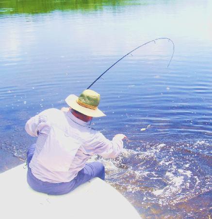 Pesca Mahahual: Landing Tarpon on fly rod