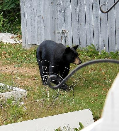 Christmas Farm Inn & Spa: Another picture of the momma bear.