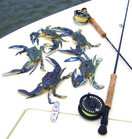 Pesca Mahahual : Blue Crabs from Bay Bottom