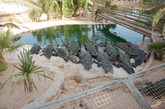 Iberostar Mehari Djerba: croc farm.... a must