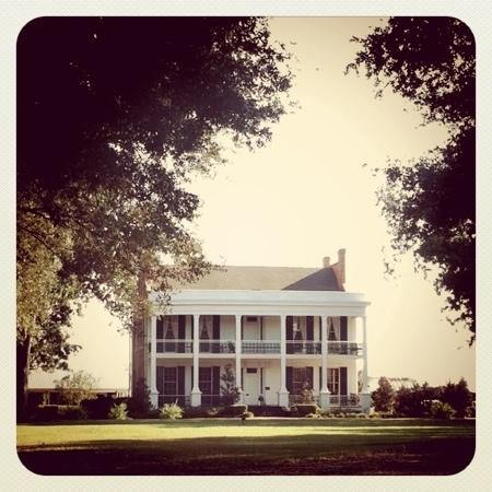 Loyd Hall Plantation: taken September 27th in the late afternoon