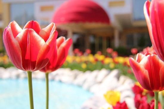 Hotel Abano Leonardo Da Vinci Terme & Golf: Ingresso