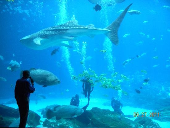 Georgia Aquarium: Ocean Voyager