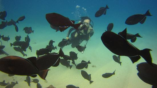 Oahu Diving: tons and tons of fish!