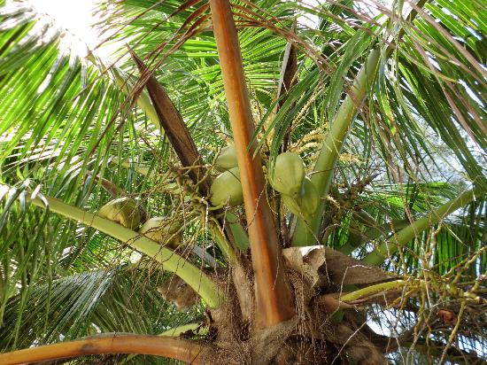Gold Beach Hotel : Palm tree nearby
