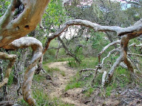 Goukamma Nature Reserve: Coastal Forest