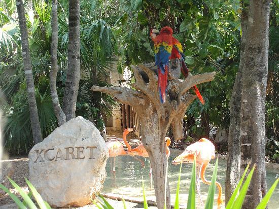 Xcaret Eco Theme Park: entrada