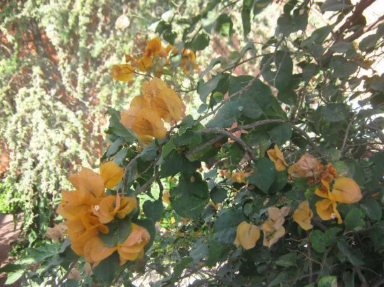 Hosteria San Roque: flores que abundan en los patios
