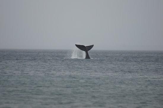 Puerto Madryn, Argentina: Ballena